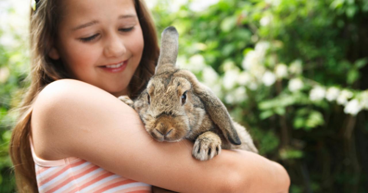 sterylizacja królika